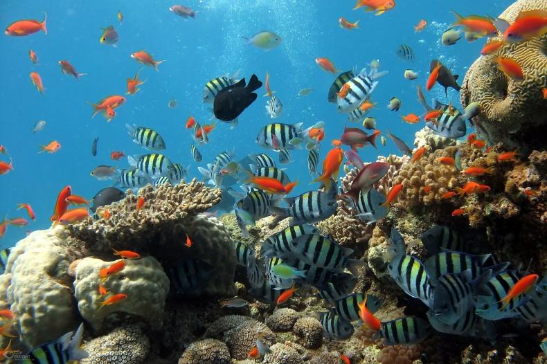 Alarmujące dane. Rafy koralowe zmniejszyły się o 14 procent od 2009 roku - GospodarkaMorska.pl