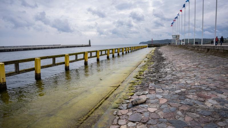 W majówkę nietypowa atrakcja na Skwerze Kościuszki w Gdyni - foka wygrzewała się na kamieniach-GospodarkaMorska.pl